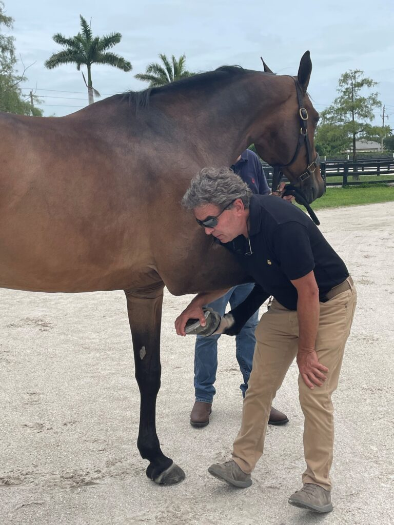 Dr. Jorge Gomez is the official veterinarian for the Mexico Show Jumping Team at the 2020 Tokyo Olympics