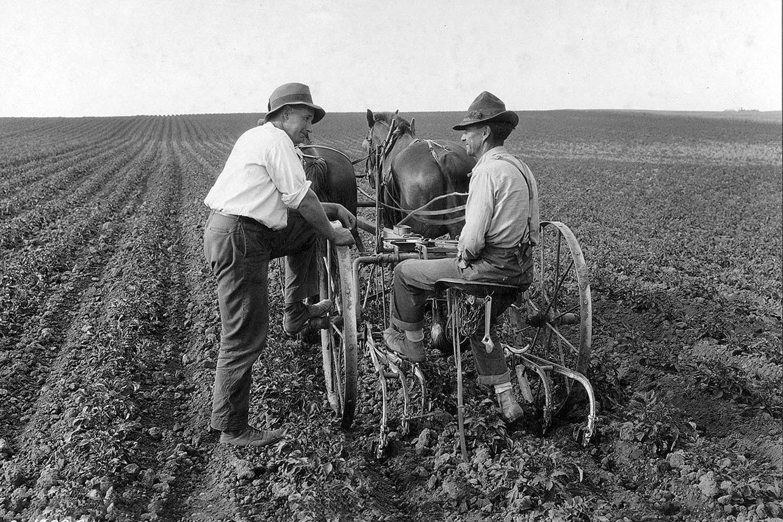horse-drawn plow
