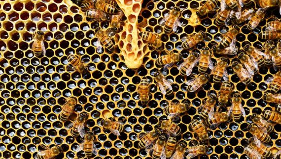 bee-removal-from-your-home