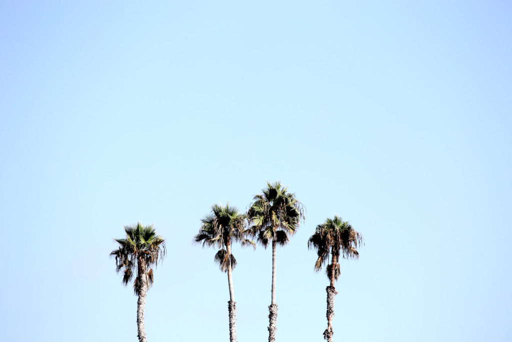 wave provocateur surfing san diego california palm trees