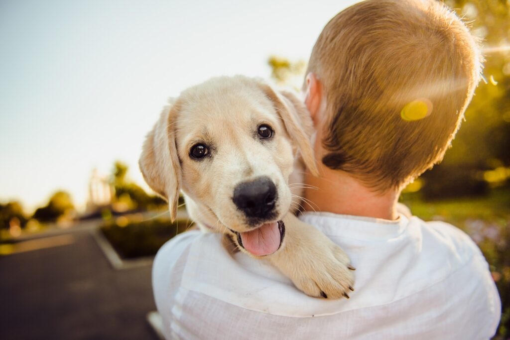 White puppy on the shoulder of his owner