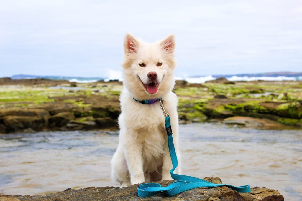 Dog with a leash to illustrate obedience training