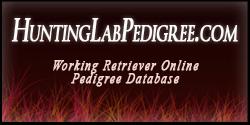 huntinglabpedigree_banner_(1)