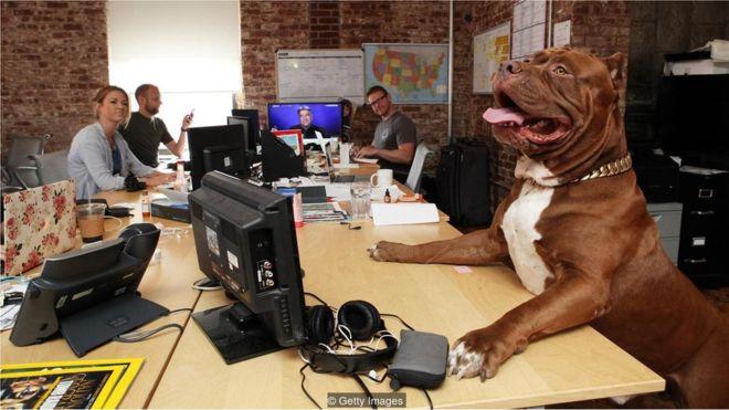 Cachorro em cima da mesa de trabalho com funcionários sorrindo ao fundo