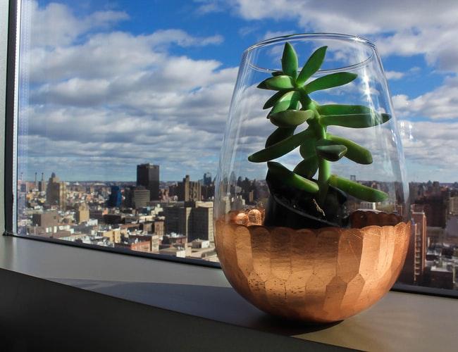 Vasinho com planta tipo suculenta com fundo de horizonte de prédios