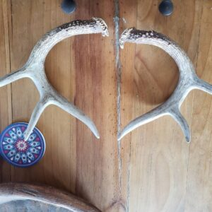 Shed's Antlers Set