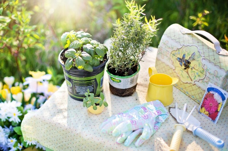 growing a herb garden