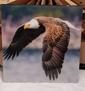Eagle on Acrylic