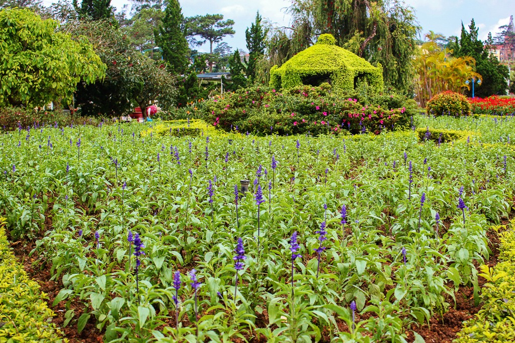 Blooming flowers in Flower Garden in Dalat, Vietnam