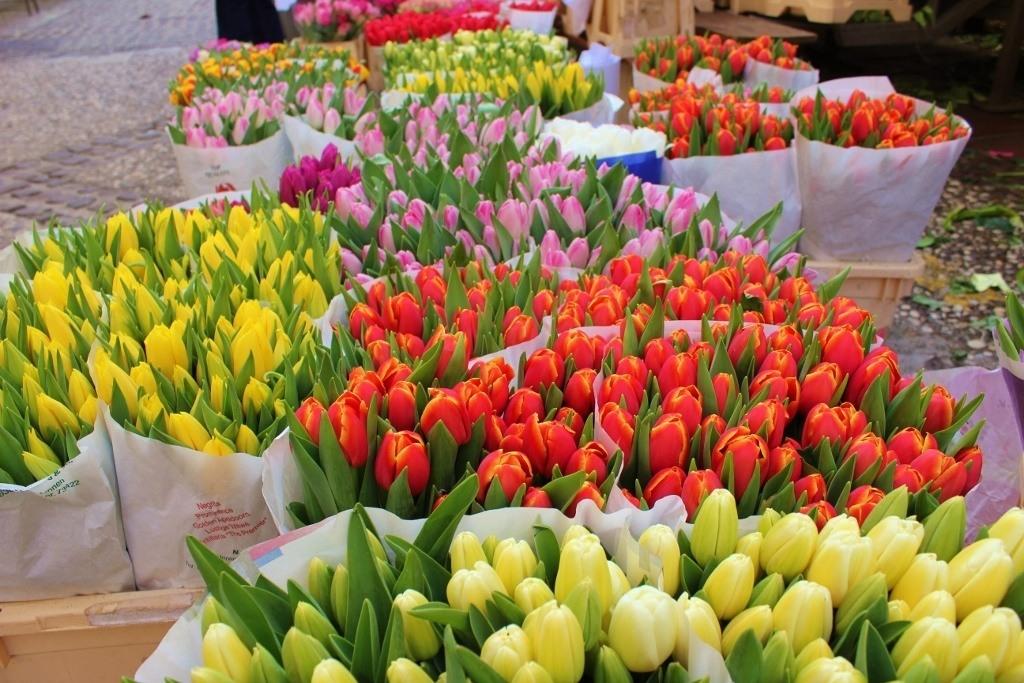 Flowers for sale at the Ljubljana Market in Ljubljana, Slovenia