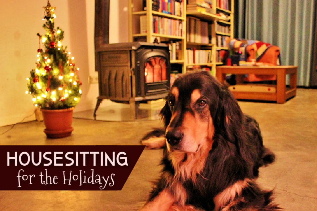 Housesitting for the holidays Dog Sit Christmas by JetSettingFools.com