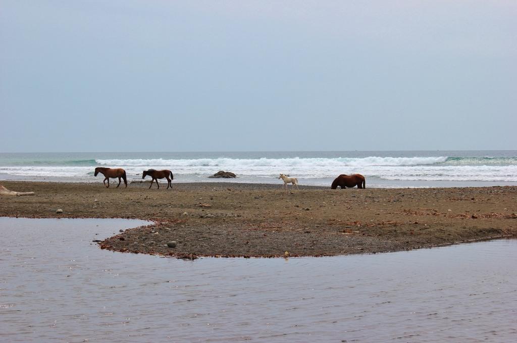 Pavones, Costa Rica Wild Horses on Beach JetSetting Fools