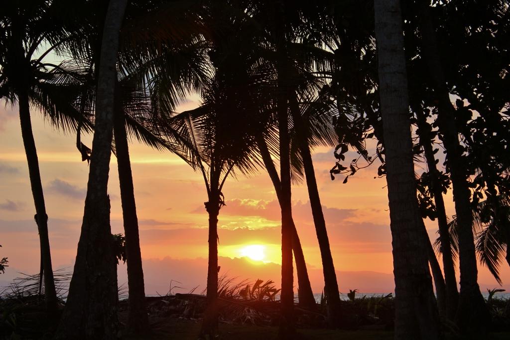 Sunset through the palm trees on Playa Zancudo, Costa Rica