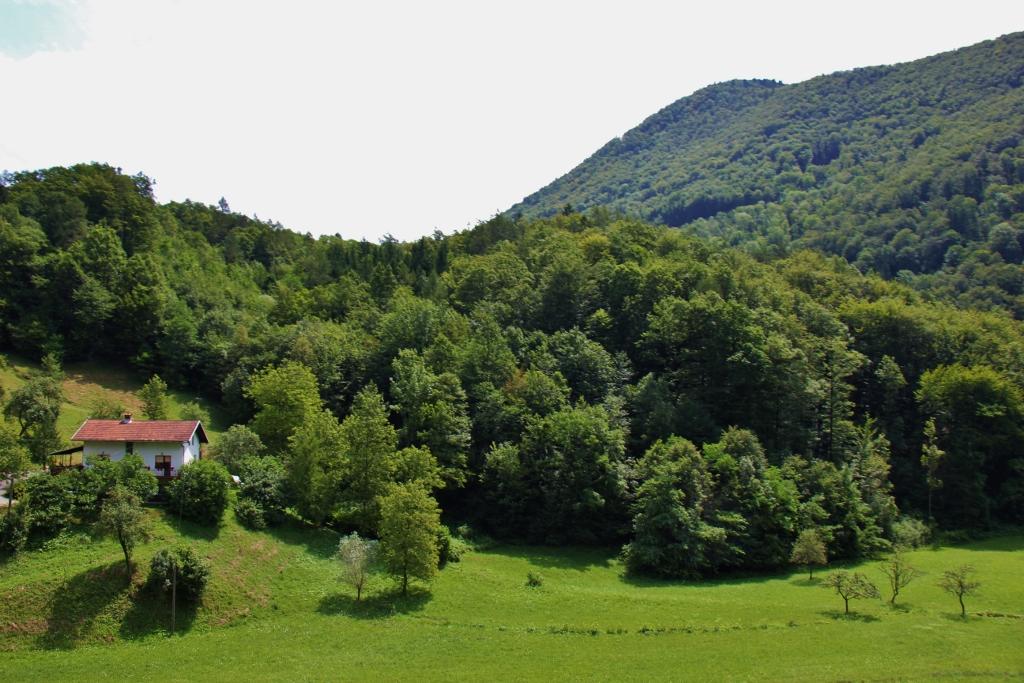 Pasture and mountain views from scenic train in Slovenia, Bohinj Railway
