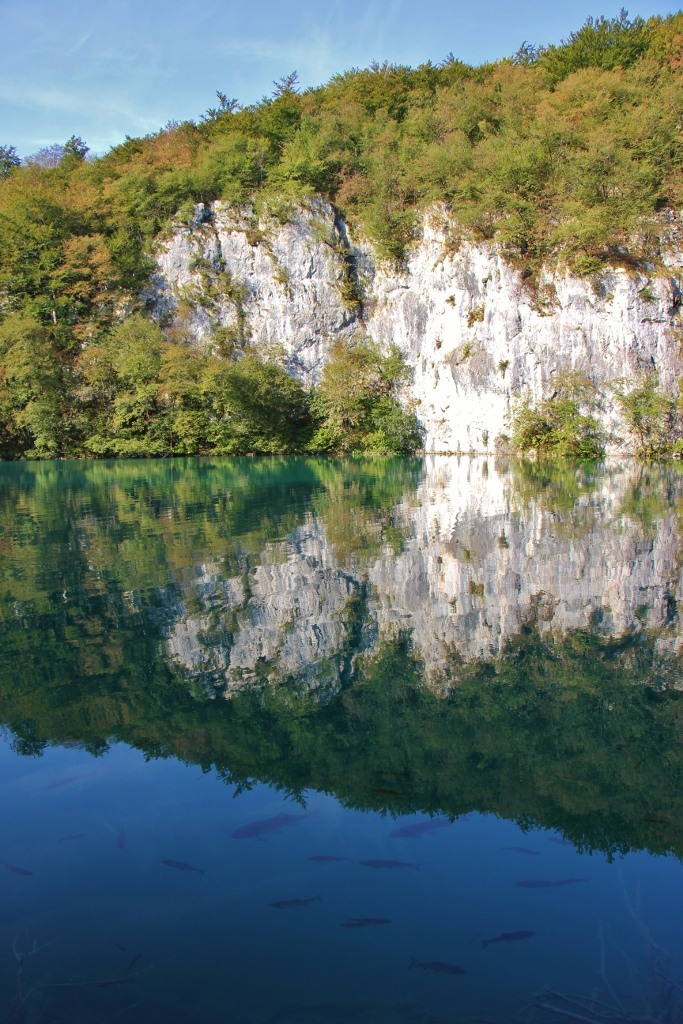Fish swim below mountain reflection, Lower Lakes, Plitvice Lakes National Park, Croatia