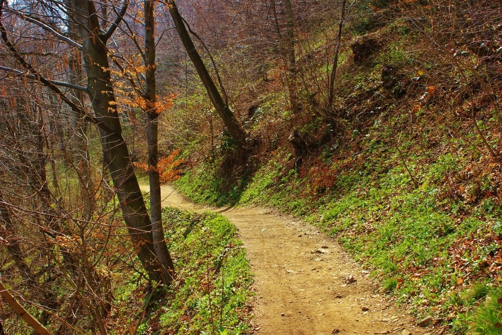 Dirt hiking trail in Medvednice Nature Park in Zagreb, Croatia