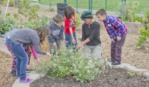 (center in green hat) Dig Down Deep garden educator Mindy Swanson with Alice Birney Elementary students (Photo by Anulak Singphiphat)