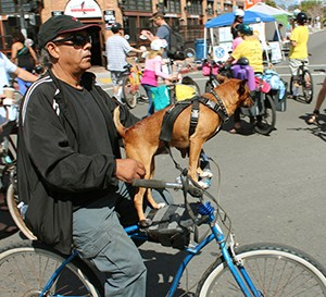 Six legs and two wheels at a recent CicloSDias event in San Diego (Courtesy SDCBC)