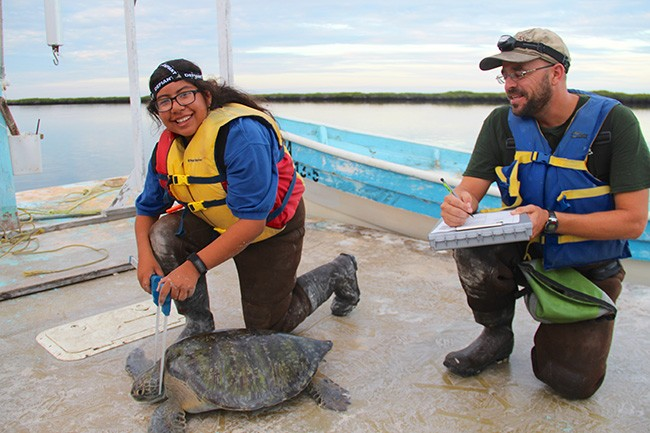 Ocean Leader Rebecca Alvarez works alongside National Oceanic and Atmo- spheric Administration scientist Dan Lawson to measure a sea turtle as part of their bycatch research. (Courtesy of Ocean Discovery Institute)