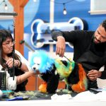 """University Heights dog stylist competes on """"Pooch Perfect"""""""