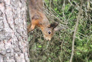 trilha dos esquilos arosa