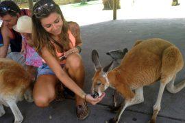 visitando cangurus perth australia