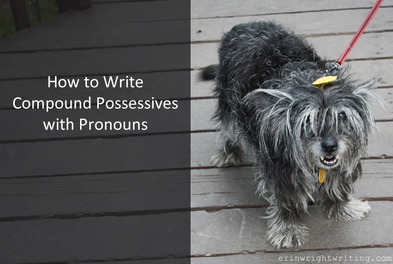 Image of Windy the Cairn Terrier | How to Write Compound Possessives with Pronouns