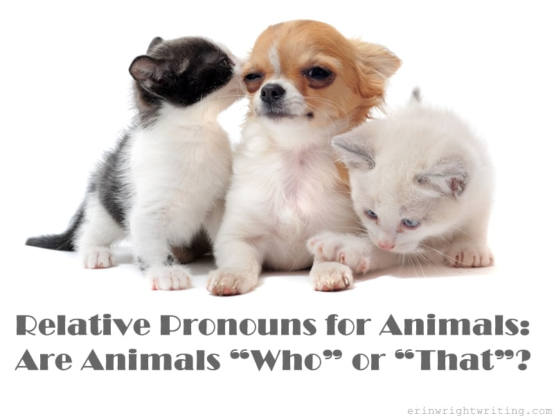 """Relative Pronouns for Animals: Are Animals """"Who"""" or """"That""""?"""