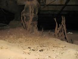 termite crawlspace