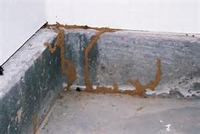 termite slab