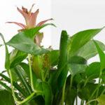 value-plant-glass