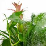 value-plant-gluechip