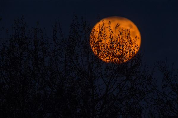 That Big, Shiny Moon