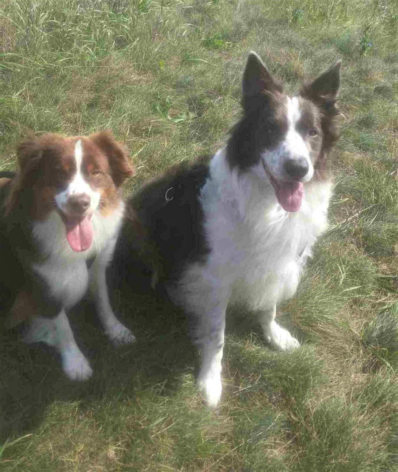 Happy Dogs/ Dog Walker/ Summer Dog Walks