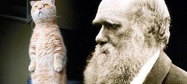 cat evolution proof