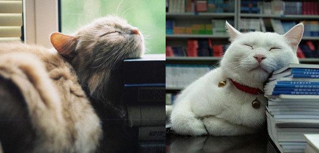 cat face book