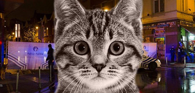 cat memes brussels terror
