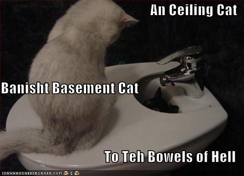 ceiling cat vs basement cat