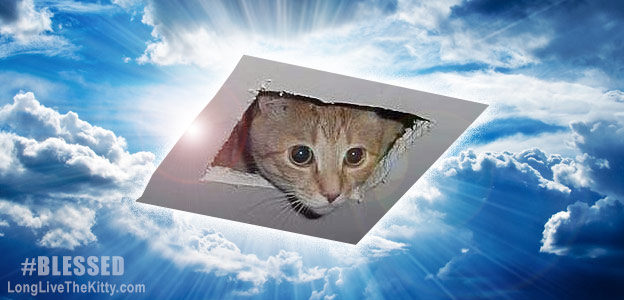 ceiling cat watching you blessed