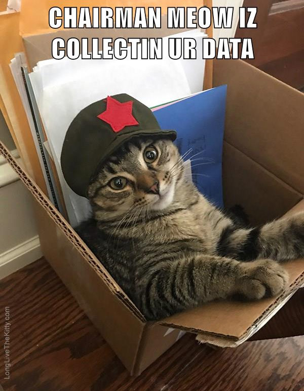 chairman meow collecting data