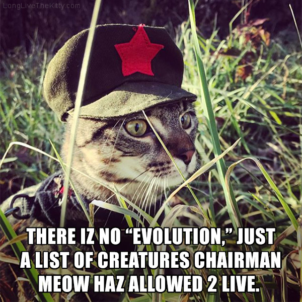 chairman meow cat evolution theory