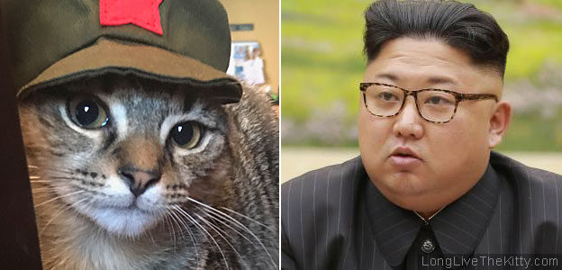 chairman meow kim jong un_faces