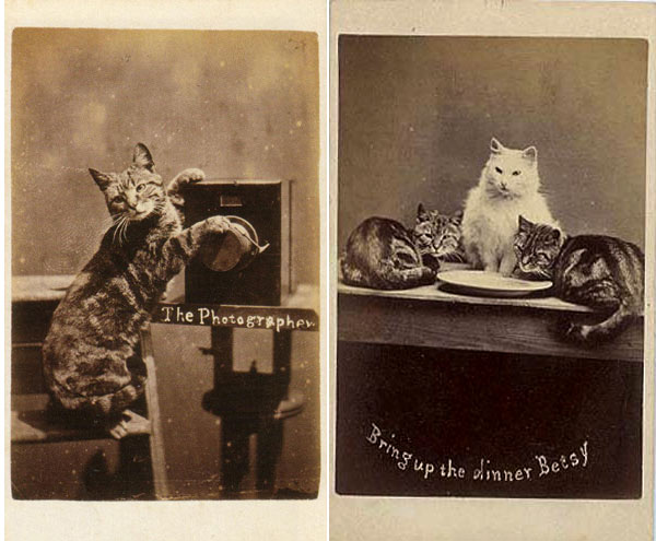 first lolcats ever