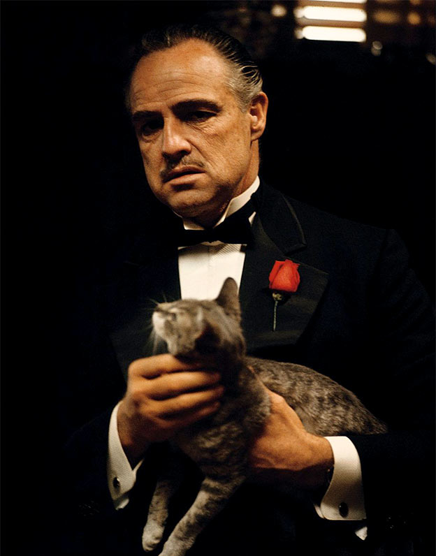 godfather cat