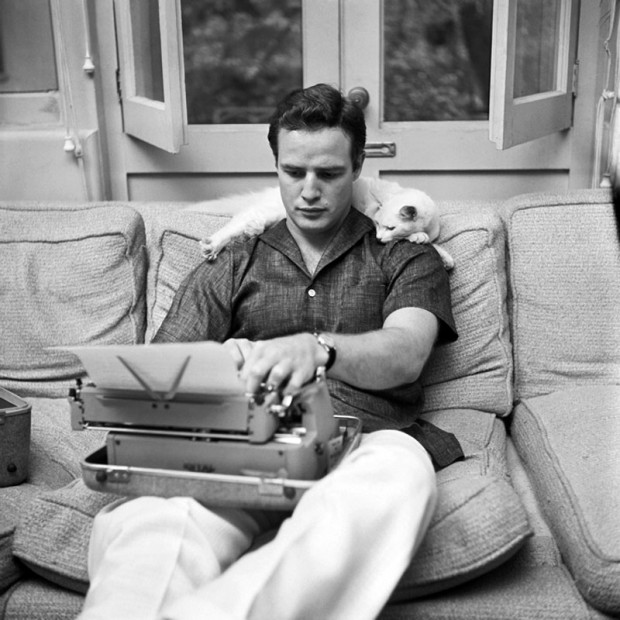 marlon brando cat owner