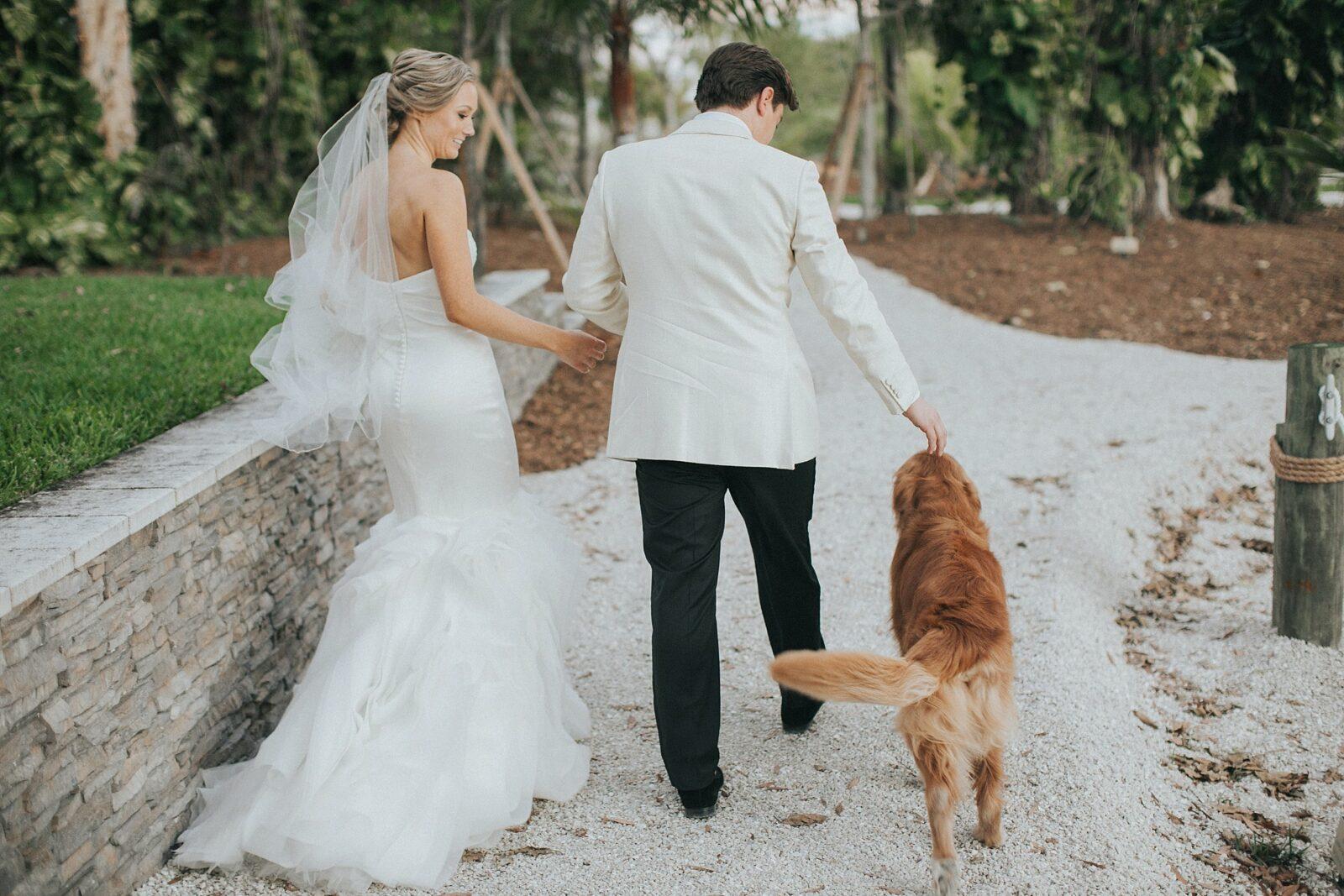 dogs on wedding days