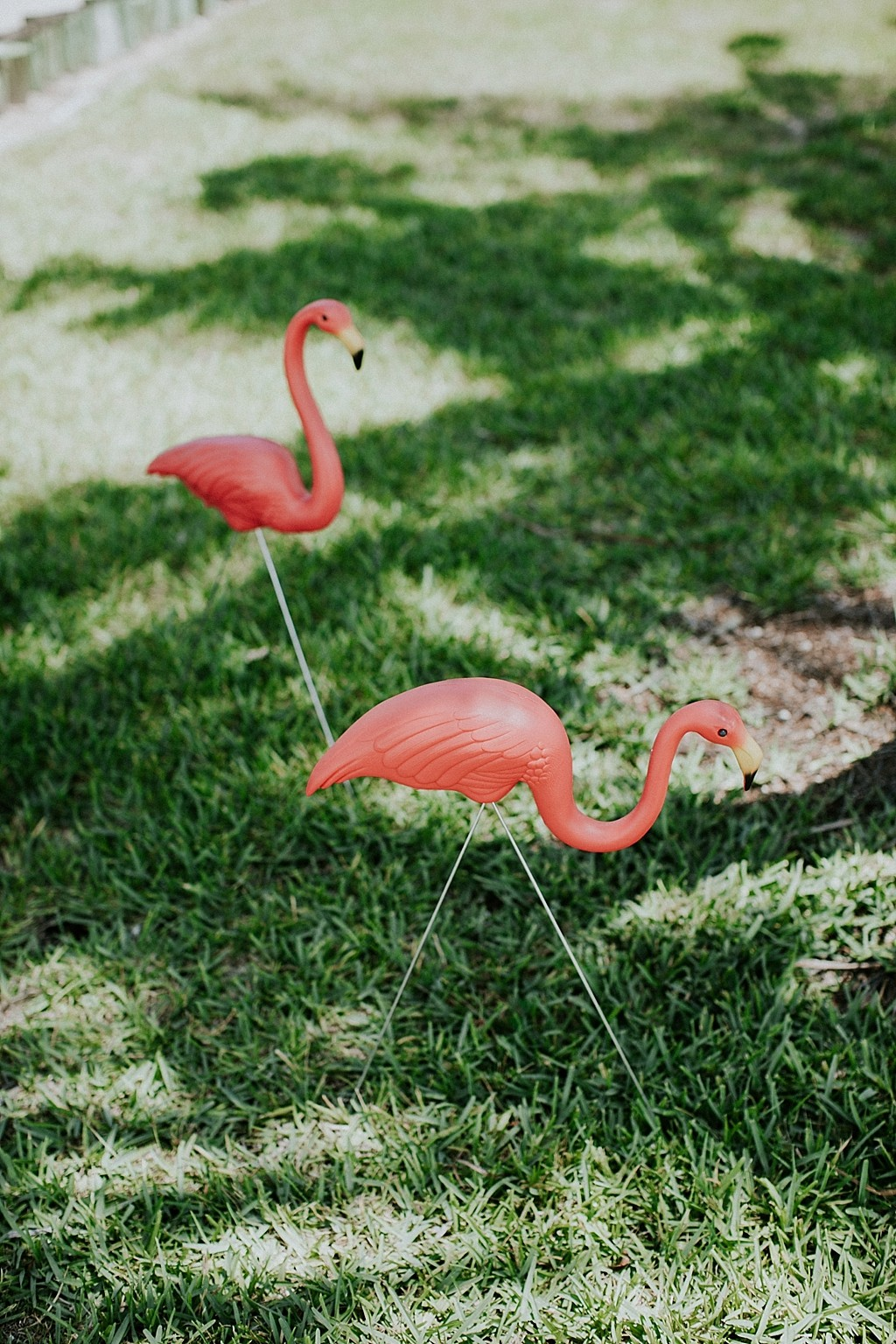 flamingo wedding decorations