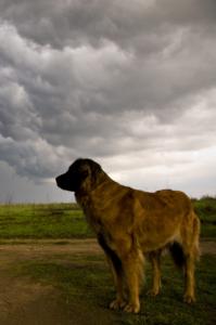 dog tall storm