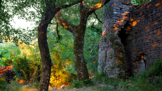 Ritual | Summer Solstice | Nature