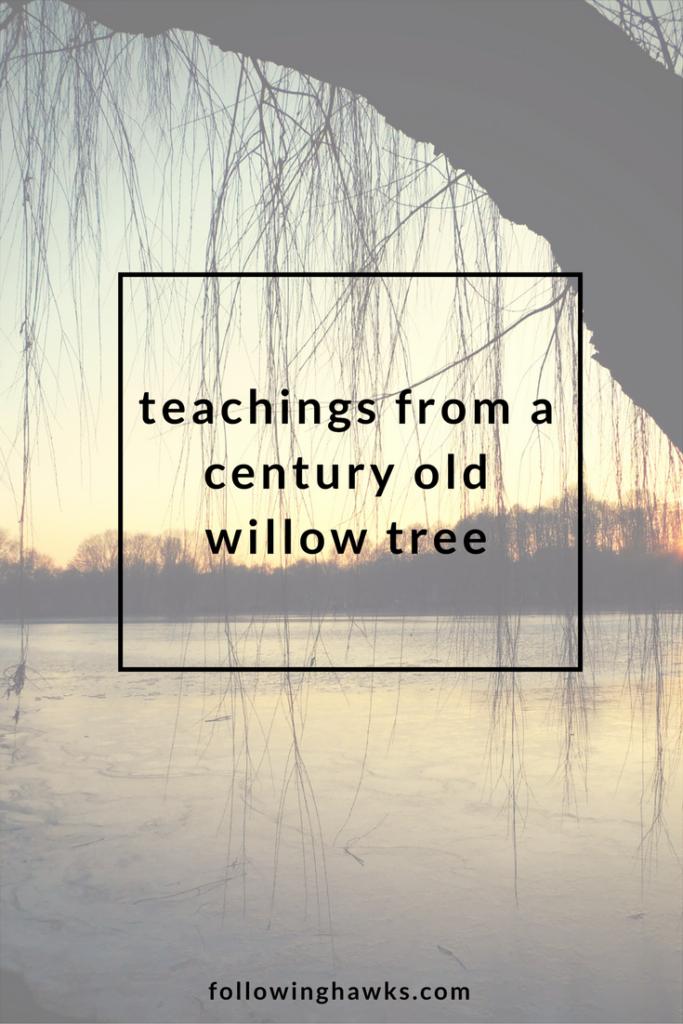 Willow Tree | Totem | Reiki